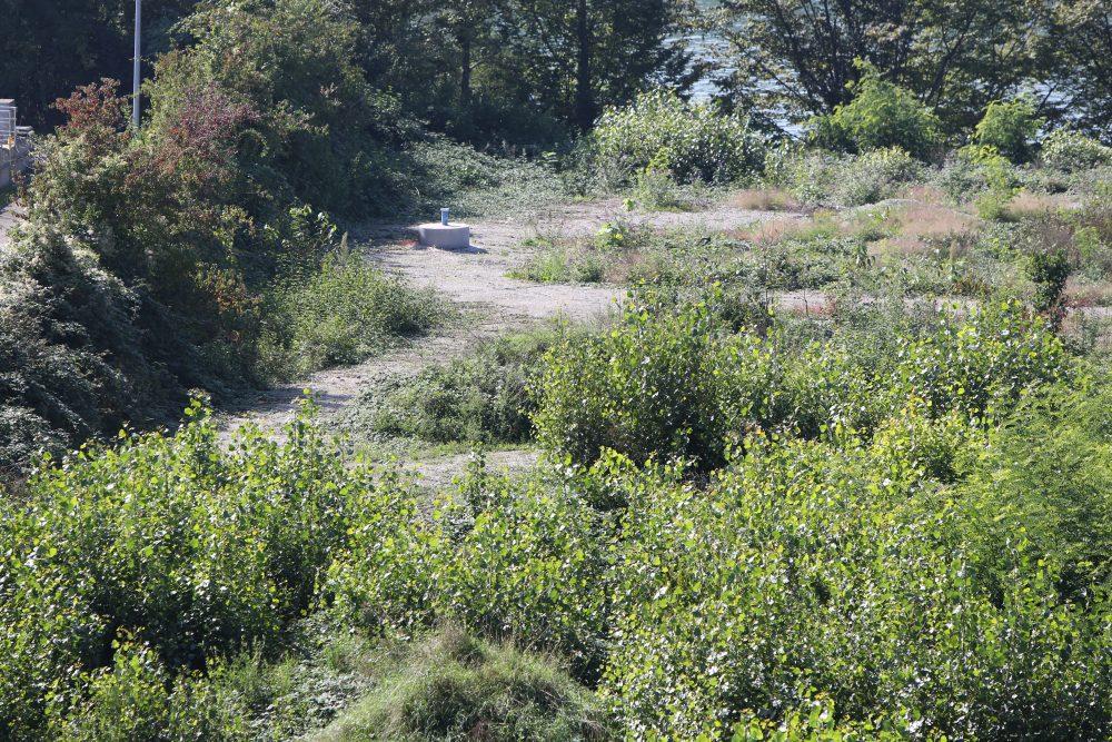 Grundwassermessstelle auf dem Perimeter 1 (Datum der Aufnahme: Spätsommer 2013), Quelle: Pressefoto Roche.