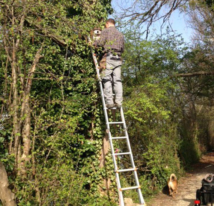 Befestigung von Fledermauskästen (Datum der Aufnahme: Sommer 2014), Quelle: Pressefoto Roche